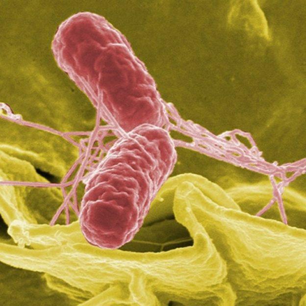 Bakterie i biofilm